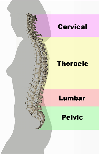 Epidural Steroid Injections Spinal Anatomy | PainDoctor.com