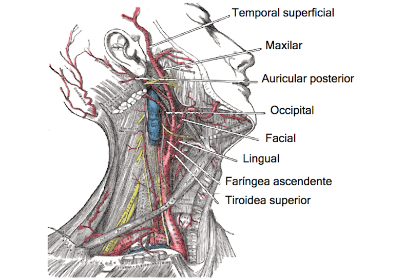 Occipital Nerve Block | PainDoctor.com