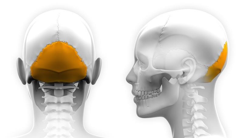 Occipital Neuralgia Anatomy | PainDoctor.com