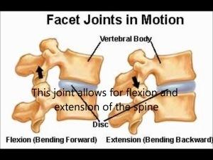 facet-joint-motion